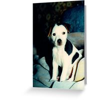 Callie Puppy Greeting Card