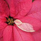 December 2010 by Nancy Polanski