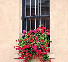 Geranium Window Box by patapping