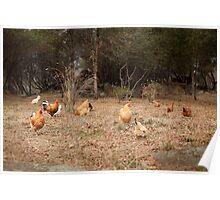 The chicken yard Poster