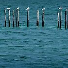 Brown Pelican and Friends by Yukondick