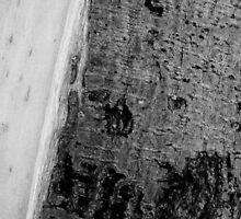 Bark texture by Ivan Cabrera