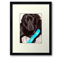 Look What the Cat Did to my Toy! Framed Print