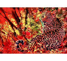 THE LEOPARD - A COLLABORATION Photographic Print
