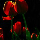 Tulips at Night by Beckon