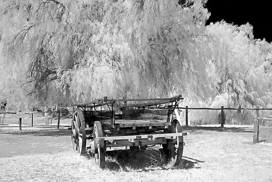 Old Cart - Infrared by Hans Kawitzki