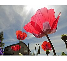Poppies and Sky Photographic Print