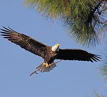 adding to the nest by kathy s gillentine