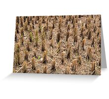 Rice Stubble Greeting Card