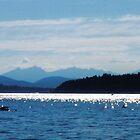 A View from Jetty Island, near Seattle, Washington by Igor Pozdnyakov