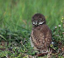 youngster by kathy s gillentine