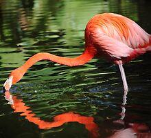 Flamingo by kathy s gillentine