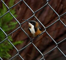 Dont fence me in! by WendyJC