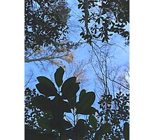 Blue Skies Pt. II Photographic Print