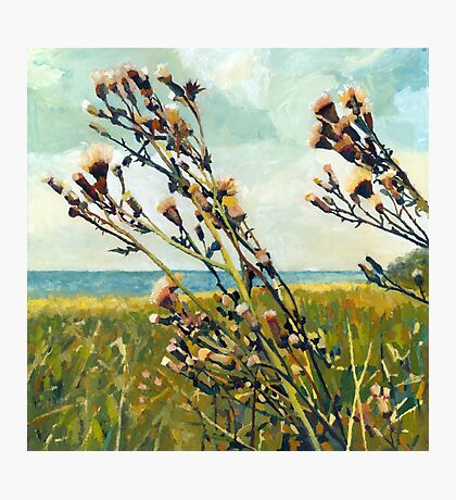 Thistle on the Beach Photographic Print