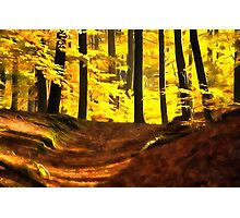 Forest 17 Photographic Print