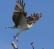 up & away by kathy s gillentine