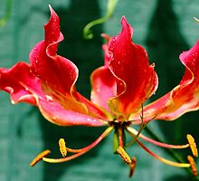 Flame Blossom by Larry Beat