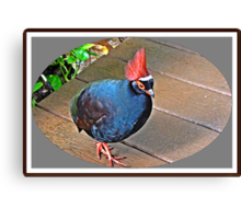 """"""" The Rouroul crested Partridge"""" Canvas Print"""