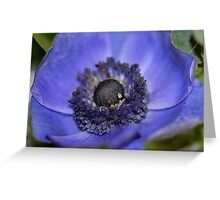 Hello Beauty II Greeting Card