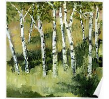 Birches on a Hillside Poster