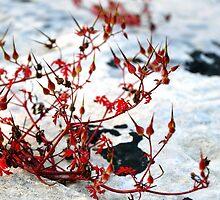 Nature passion by Peter Mark Mercieca