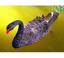 Birds Eye View Photographic Print