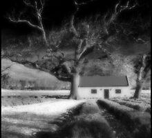 LAVENDER FARM by Alida Mouton