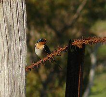 bird on a wire by flipteez