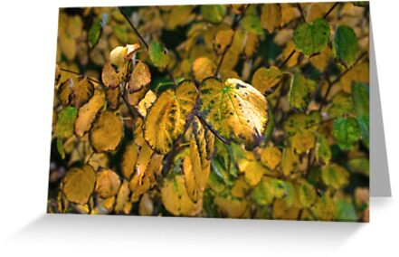The Changing Leaves by Trevor Kersley