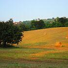 Wheat in the sun by Bru66