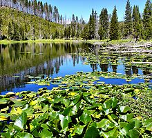 Lily Pond in Yellowstone by Teresa Zieba