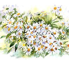 Daisy by artbyrachel