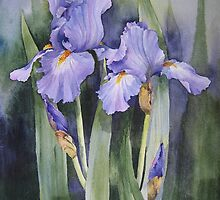 Mauve Iris by artbyrachel