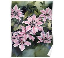 Nellie Moser Clematis Poster