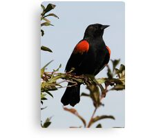 A Regal Red-Winged Blackbird Canvas Print