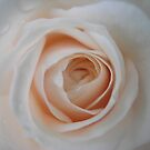 my heart is a rose by Annabelle Evelyn
