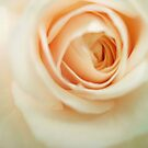 my heart is a rose 2 by Annabelle Evelyn