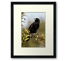Showing a Pair of White Feathers Framed Print