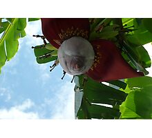 Exotic Tree Photographic Print