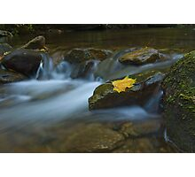 A Hint of Autumn Photographic Print