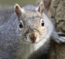 Staring Squirrel by Richard Durrant