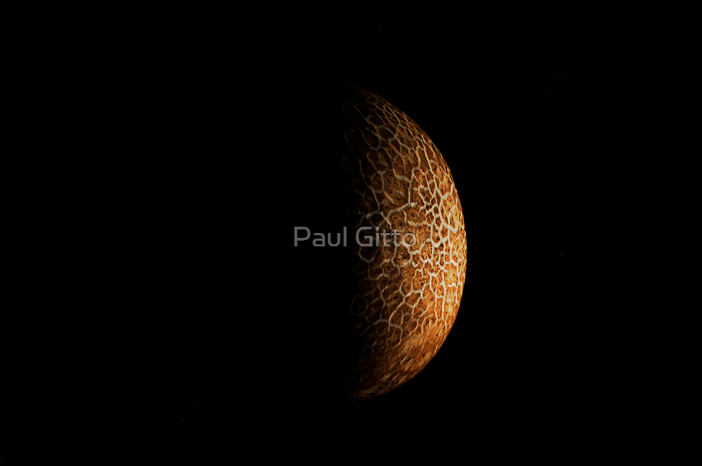 Schroom Moon by Paul Gitto