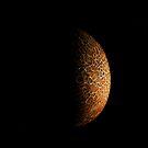 Schroom Moon by Paul Gitto