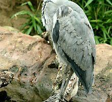 Big Beak by redscorpion
