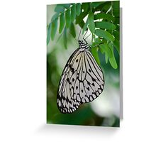 idea leuconoe butterfly just hanging Greeting Card