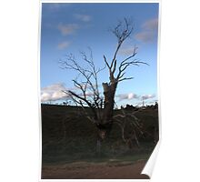 Tree at the farm Poster