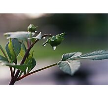 Rain5 Photographic Print