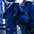 Blue Cow by John Corney