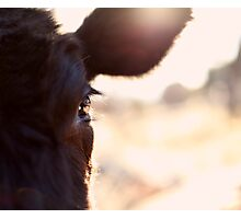 Cows have the most beautiful eyes Photographic Print